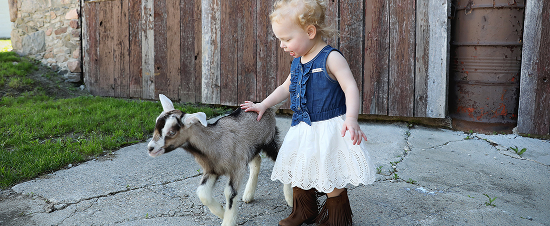 Young child petting a goat.